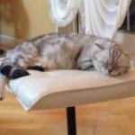 良い子は寝る時間ですよ|アレクサンダー_オフィシャルブログ「ねこのしっぽ欲しいな」Powered_by_Ameba